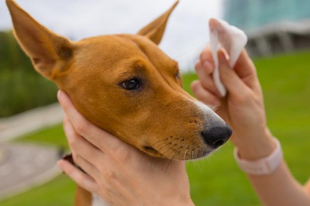Неизвестная кавказская женщина заботится о руках своей любимой собаки девушки, протирая влажной салфеткой ...