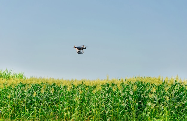 Unmanned aircraft dorn corn farm, agricultural automation, digital farming