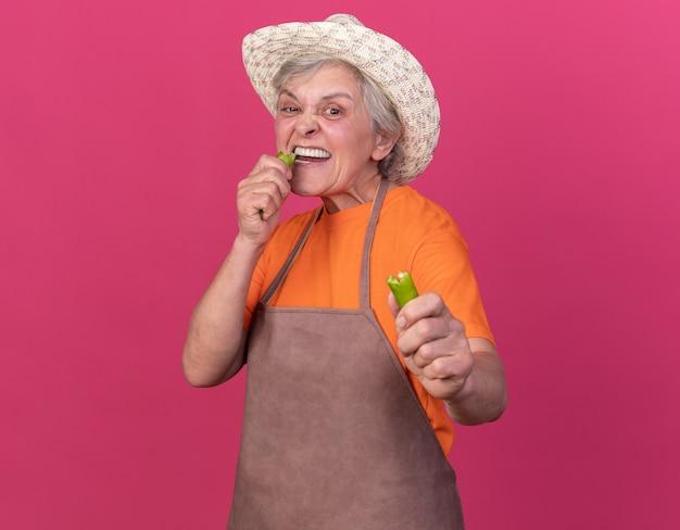 Una donna anziana scontenta che indossa un cappello da giardinaggio che morde una parte di peperoncino rotto