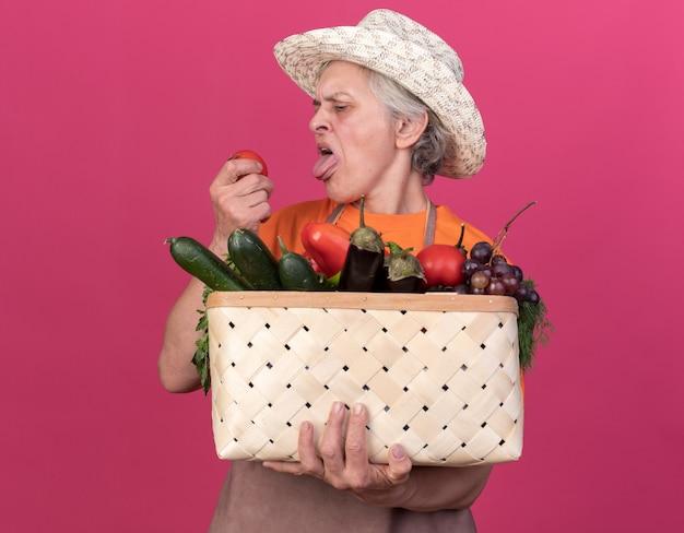Una donna anziana scontenta che indossa un cappello da giardinaggio sporge la lingua tenendo il cesto di verdure e guardando il pomodoro