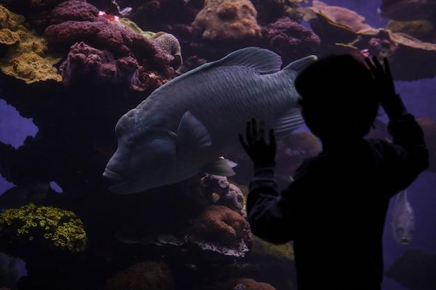巨大な魚を見ている認識できない少年