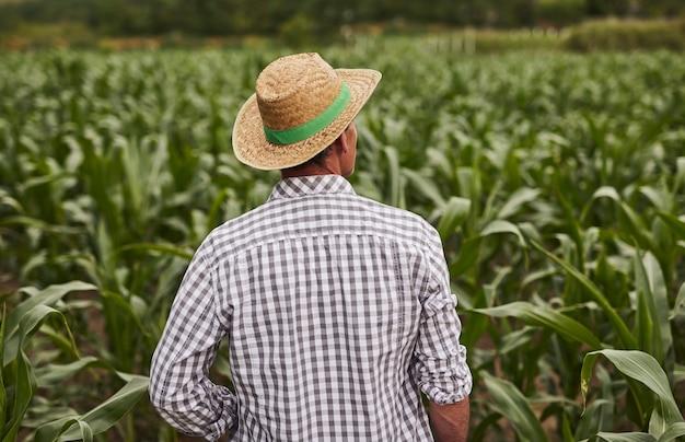Unrecognizable farmer standing in corn field