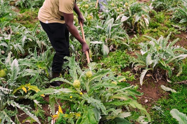 들판에서 토양을 경작하는 인식 할 수없는 농부