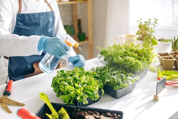 До неузнаваемости садовник выращивает микрозелень в помещении крупным планом фото