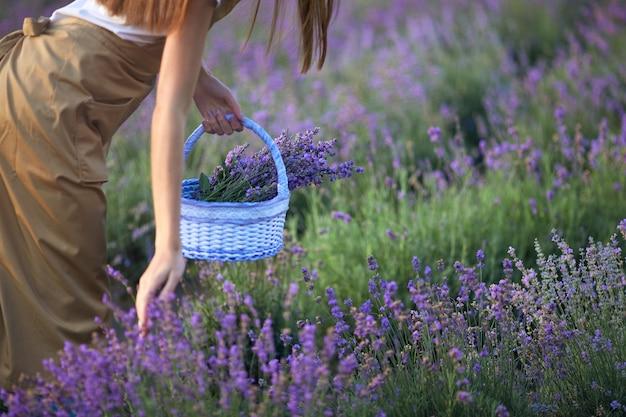 바구니 라벤더 밭을 들고 인식 할 수없는 소녀