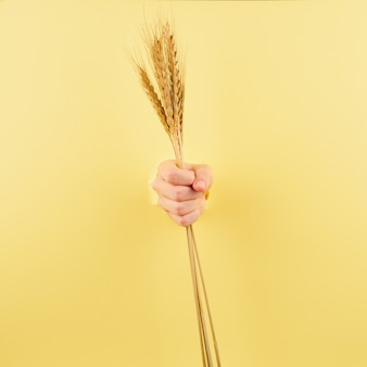 Unrecognizable person holding spikelet on pastel yellow background