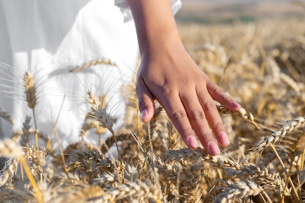 Unrecognizable woman gently touches growing wheat at golden sunset carefree female walking along a c... Premium Photo