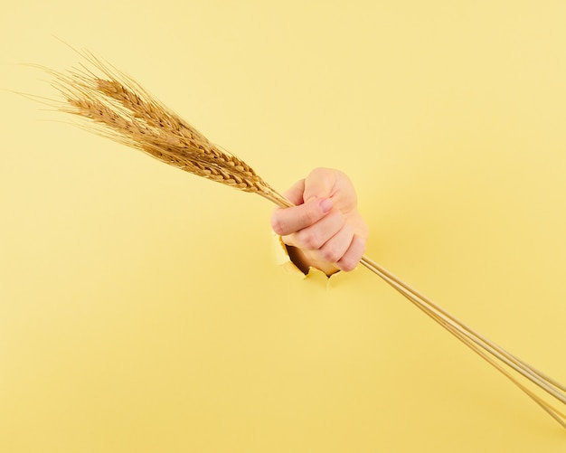 Unrecognizable woman holding spikelet on yellow