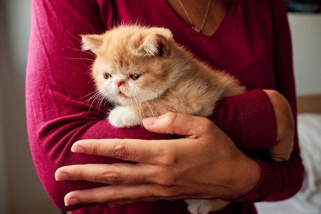 認識できない女性が小さなオレンジ色の猫を抱擁します。