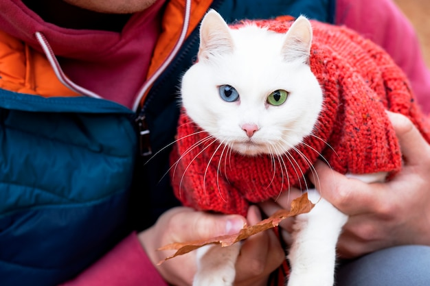 Unrecognizable, a woman is holding in her arms her cute cat, an angora breed of animal with different galases. outdoors in the fall.
