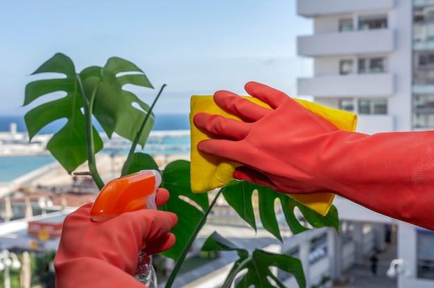 家を掃除する保護手袋で認識できない女性の手