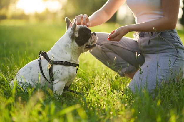 Unrecognizable woman training french bulldog in park