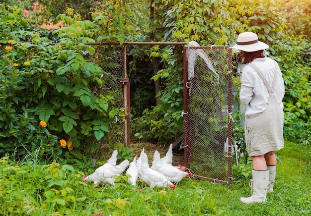 인식 할 수없는 여성 흰색 고무 장갑, 닭장에서 방목 닭에게 빨간 냄비에서 곡물을 먹이는 알을 수집합니다. 건강한 유기농 라이프 스타일. 마을에서 암탉을 낳고 가정에서 사육합니다.