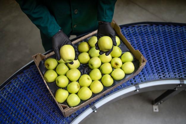 食品加工工場でベルトコンベアを介して輸送されている間、緑の有機リンゴの品質をチェックしている認識できない労働者。