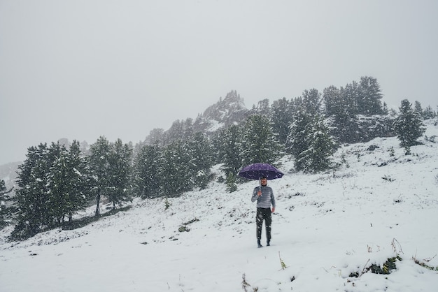 Unseasonable crazy guy with violet umbrella stands on snowy mountain in snowfall on background of coniferous forest and sharp rocks. mad man in winter on snow-covered hill with umbrella in blizzard.