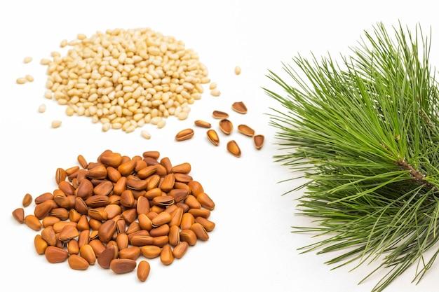 Unshelled cedar nuts. pine nut kernels and green pine tree branch.