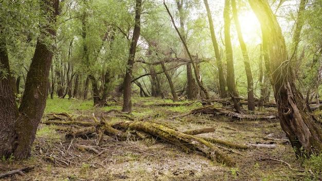 Unspoiled fresh forest nature in summertime sunlight
