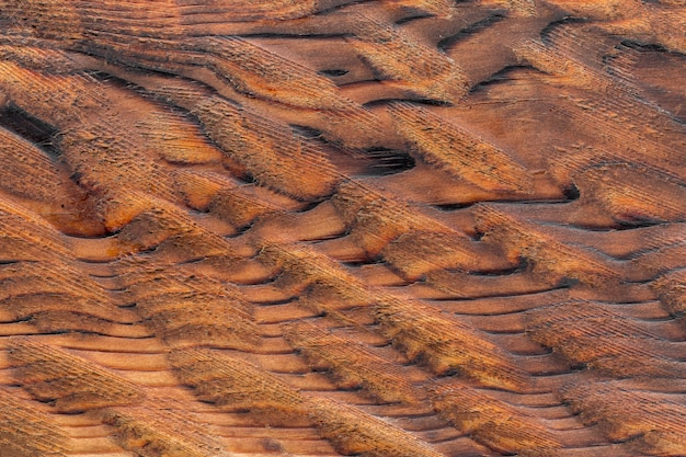 Unusual abstract wooden bark texture background