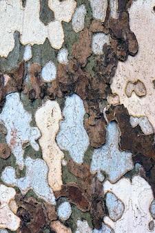 Parco di monza의 비행기 나무에 있는 특이한 나무 껍질