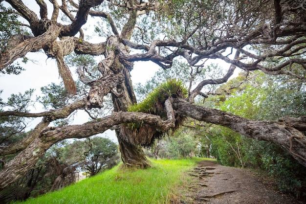 Необычное большое дерево в новой зеландии. концепция wanderlust