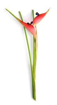 흰색 바탕에 특이한 새의 낙원 꽃