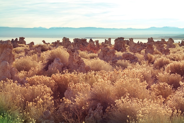 가을 시즌의 특이한 모노 호수 형성