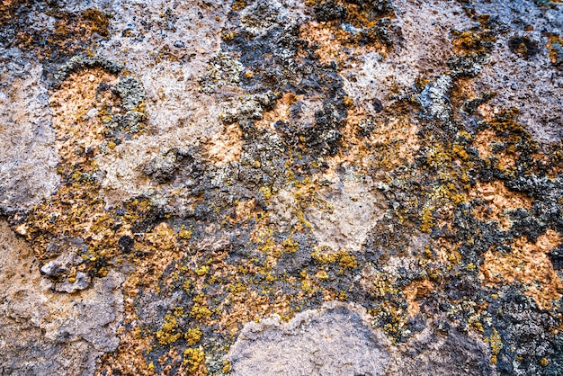 An unusual pattern of multicolored mold on gray stone wall