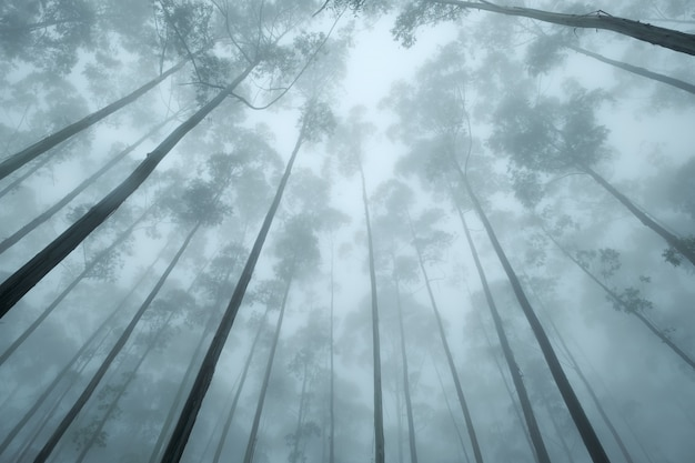 Up view on the crown of tropical trees in foggy weather