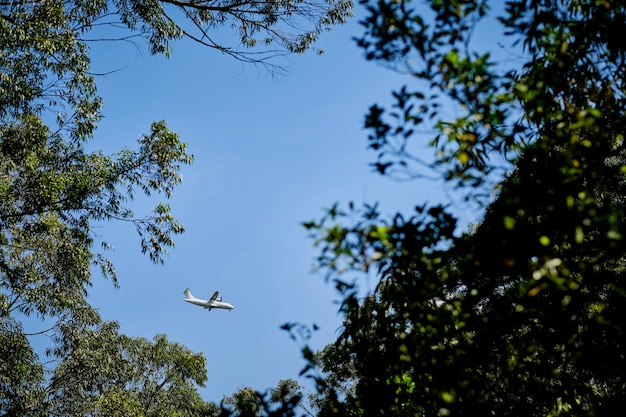 Up view from a forest of an airplane flying across blue sky
