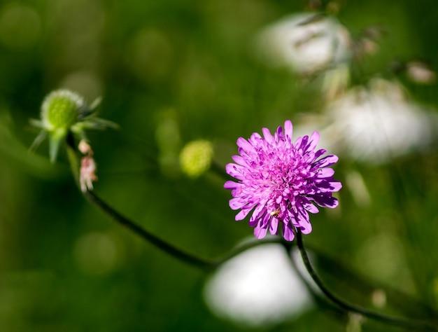 풀밭에 있는 삼엽충의 클로즈업 사진