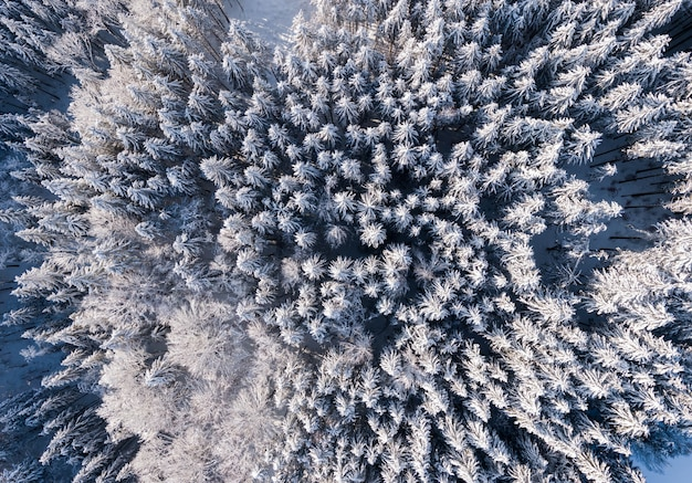 Vista dall'alto della foresta con alberi ad alto fusto coperti di neve in inverno