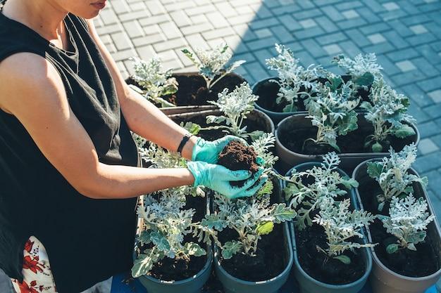 Фотография сверху: кавказская женщина пересаживает цветок дома в перчатках в солнечный летний день