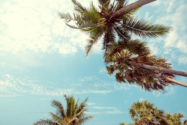 青い空と夏、uprisen角度で日光と熱帯のビーチでヤシの木。ビンテージinstagramフィルター効果