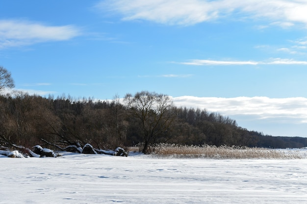 Uprooted trees on the shore of a snowy lake.