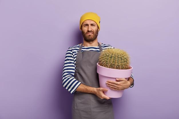 L'uomo turbato si sente stanco di piantare piante domestiche, porta un vaso di fiori con un grande cactus, lavora in un fioraio, indossa un cappello giallo, grembiule
