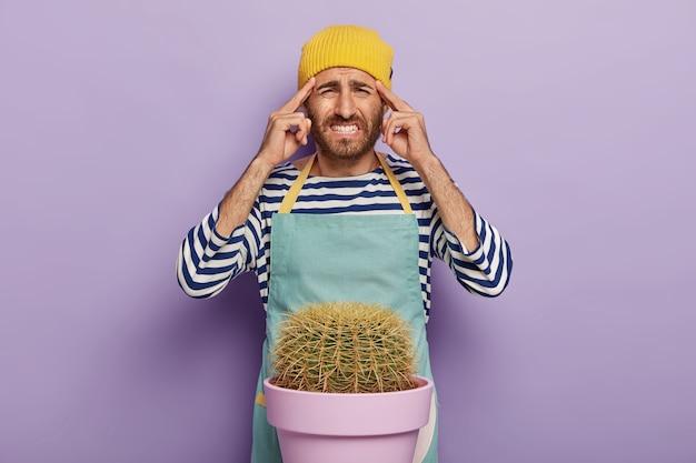 動揺した男は、こめかみに指を置き、歯を食いしばり、鉢植えのサボテンの近くに立ち、エプロンを着て、観葉植物の世話をし、黄色い帽子をかぶって、紫色の背景の上でポーズをとります。人と家事