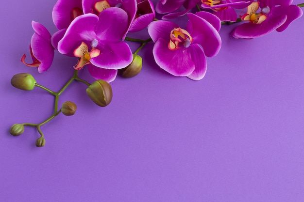 Upside down copy space background with orchids