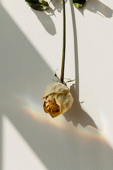 Upside down white rose on a wall