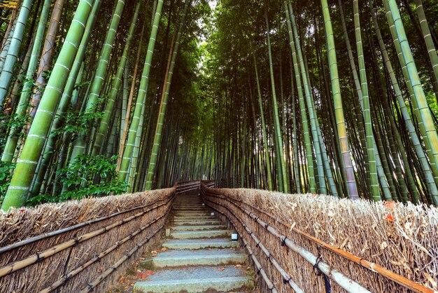 교토, 아라시야마의 adashino nenbutsuji 사원에서 대나무 숲의 위층 경로.