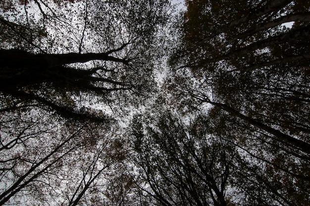 木の枝の上向きの視点