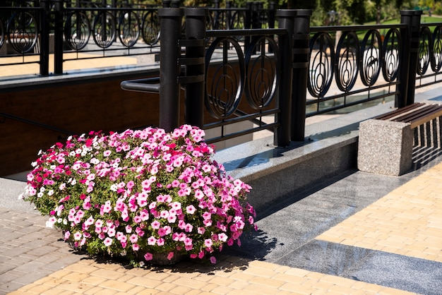 Urban flowers in tubs and landscape design on a metal railing in urban paving slabs in urban surroundings in landscape design