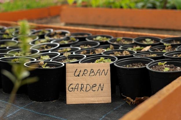 Giardino urbano con vasi di fiori