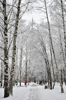 눈 속에서 겨울에 도시 공원