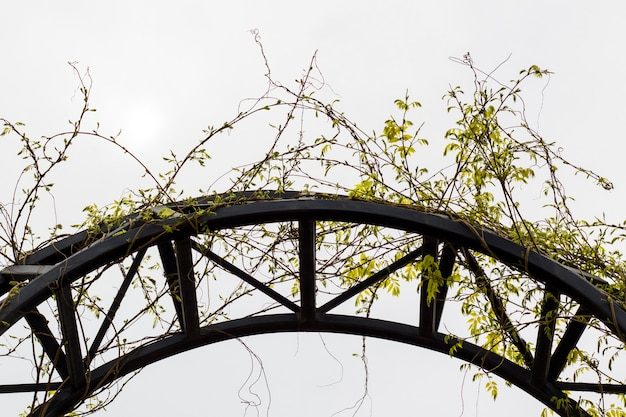 금속 건물, 트빌리시에 도시 식물