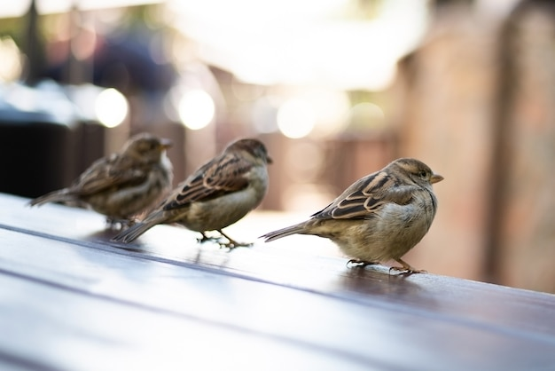 Urban sparrows in a cafe on the table. high quality photo