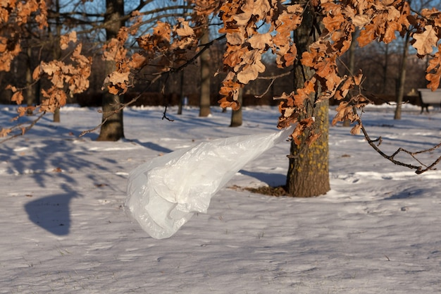 Used plastic bag caught on tree branch in the park