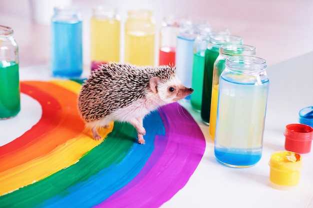 Сute hedgehog는 무지개 주위를 돌고 있습니다. 작은 애완 동물. 밝은 색. 자존심의 날. 게이 프라이드 lgbtq 플래그.