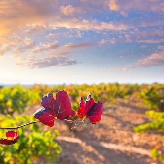 Utiel requenaの秋の黄金の赤いブドウ畑