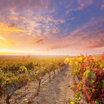 Utiel requenaブドウ畑スペインでブドウ畑の日の出