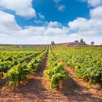 スペインのutiel requenaの地中海のブドウ園